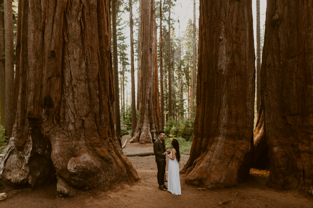 Sequoia National Park Photographer